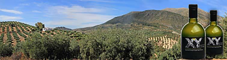 XY Monovarietal Picudo: Aceite de oliva virgen extra AOVE
