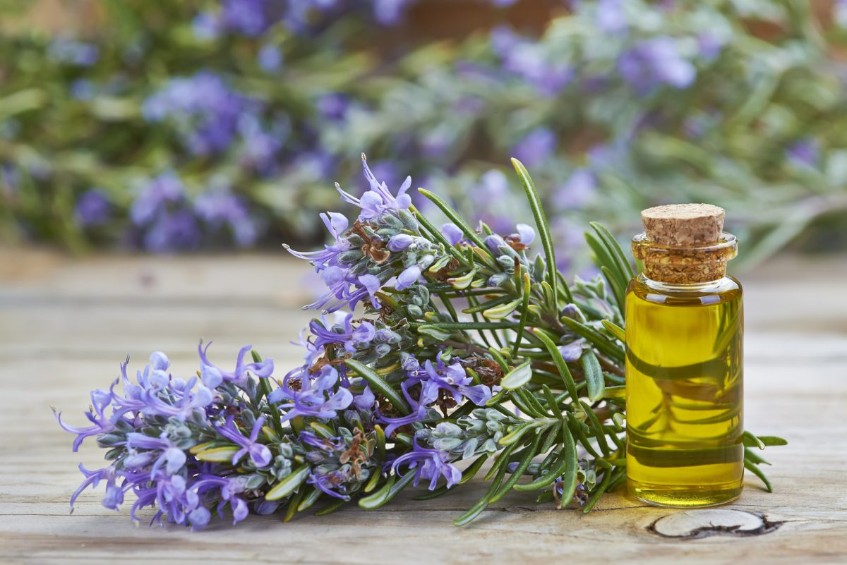 Aromas que puedes encontrar en los Aceites de Oliva Virgen Extra (AOVE)